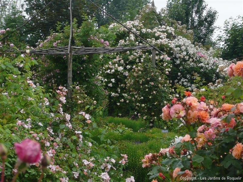 kletter rosen climbing roses on pinterest