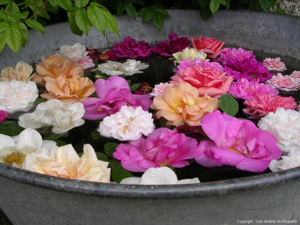 baquet-de-roses